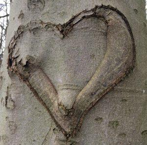 Hjertets-helende-kraft